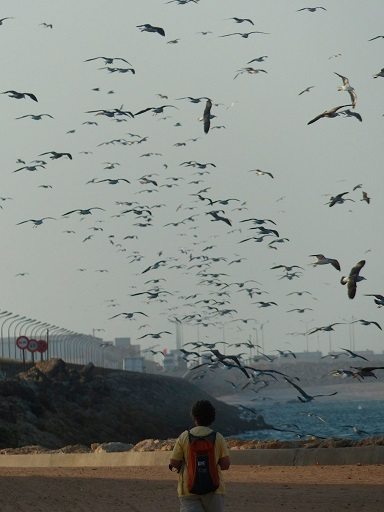 byron_birds