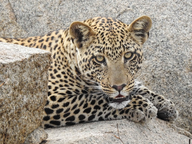 dee_youngleopard-20160905_tanzania1